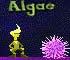 Eddie Algae